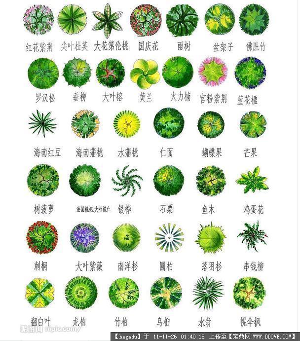 平面手绘 园林树木 植物